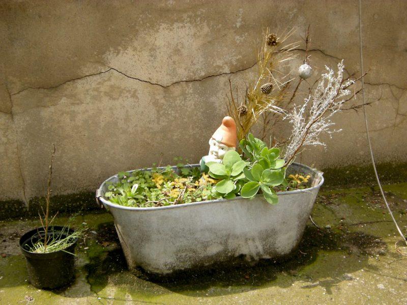 Gartenzwerg in bepflanzter Zinkwanne