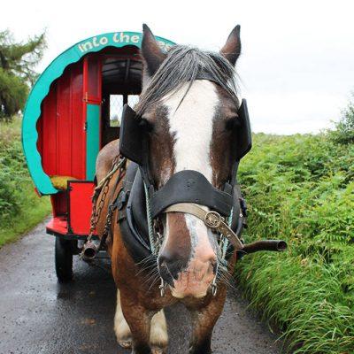 Pferd vor Kutsche in Irland